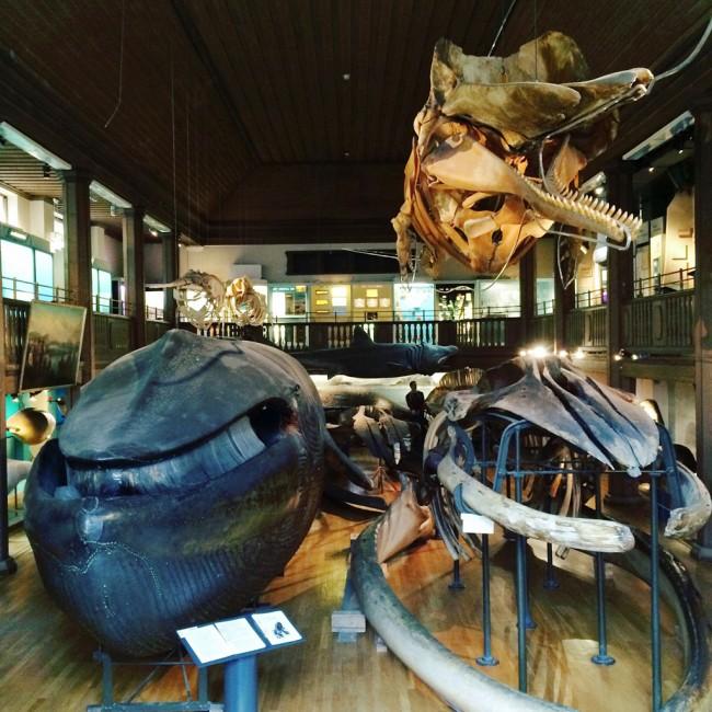 Gothenburg NHM whale