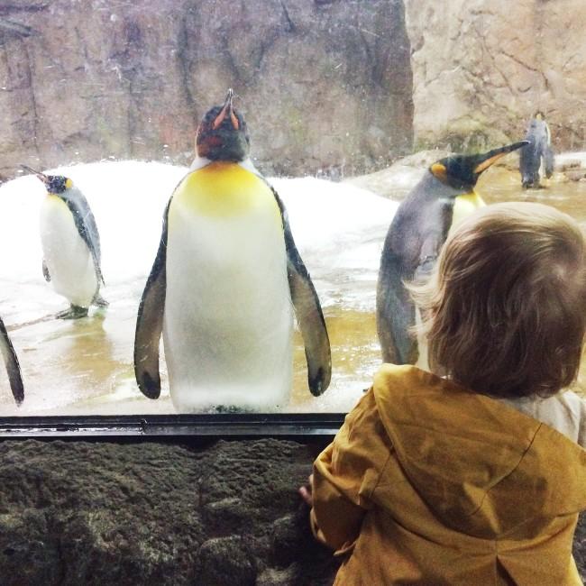 Wuppertal Zoo 01