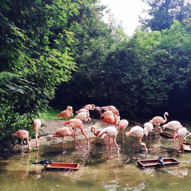 Wuppertal Zoo 02