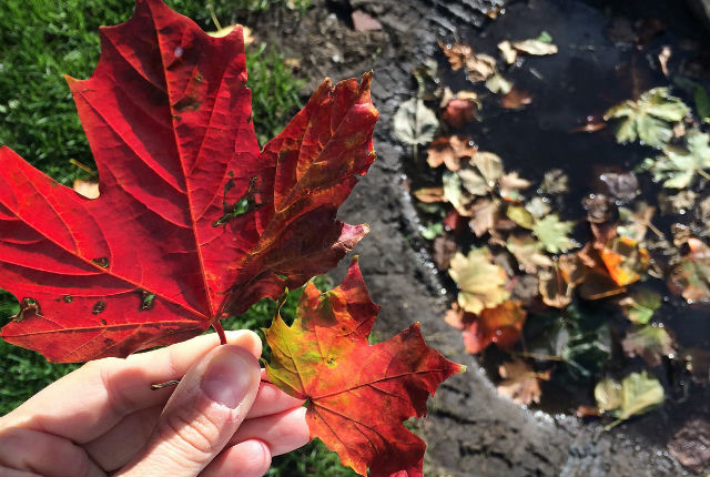things we love about autumn - preview