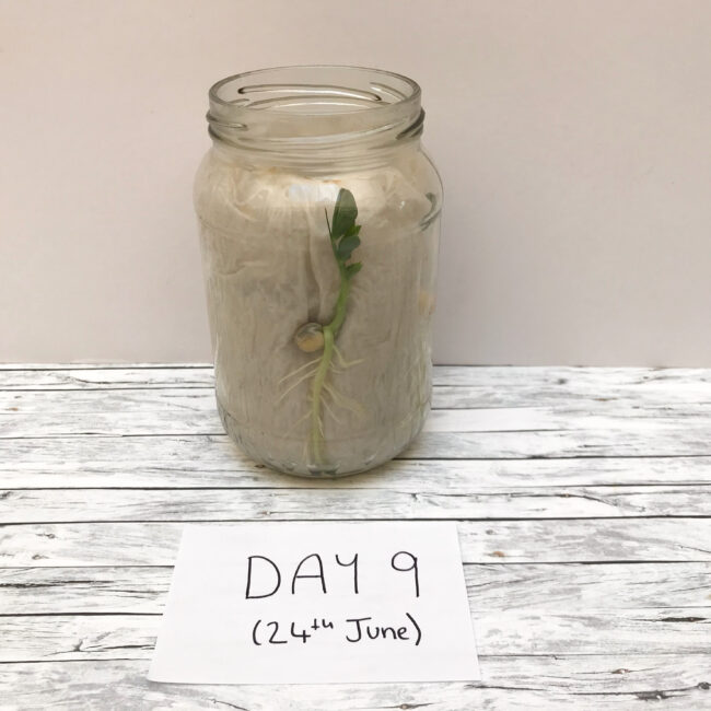 Seed Germinating Experiment